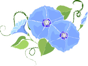 Free Morning Glory Pictures.