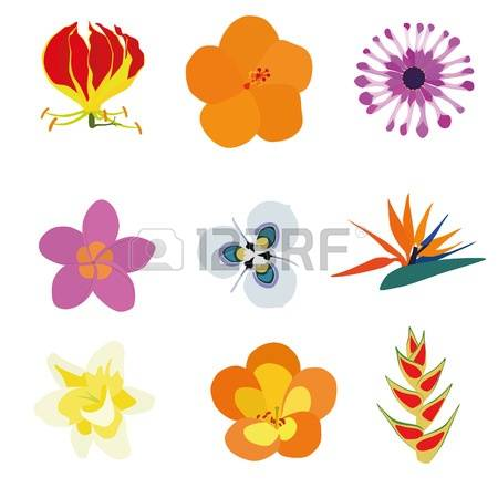 Gloriosa Lily Images & Stock Pictures. Royalty Free Gloriosa Lily.
