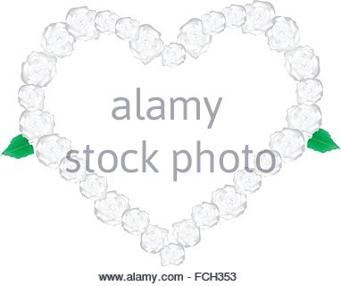 "arabian Jasmine"" (jasminum Sambac) Flower Flowers Stock Photo."