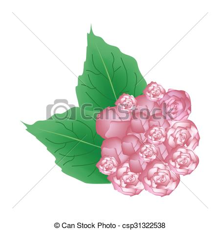 Vectors of Pink Glory Bower Flowers or Clerodendrum Chinense.