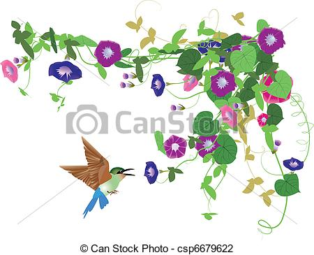 Morning glory Clipart and Stock Illustrations. 384 Morning glory.