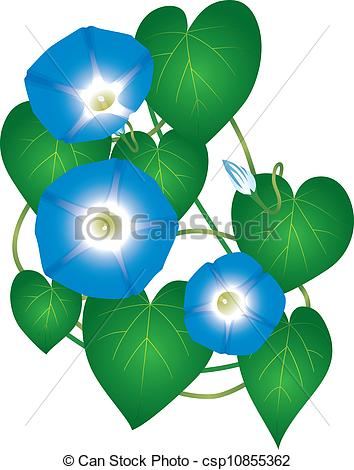 Clip Art Vector of Ipomoea morning glory flower.