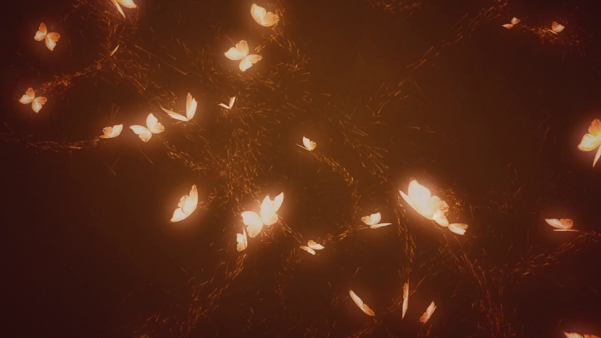 Magical glowing butterflies. Warm color. Loop. Stock Video Footage.