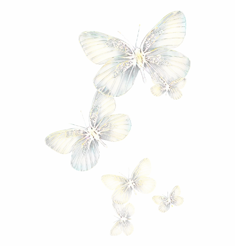 ftestickers #butterflies #light #glowing.
