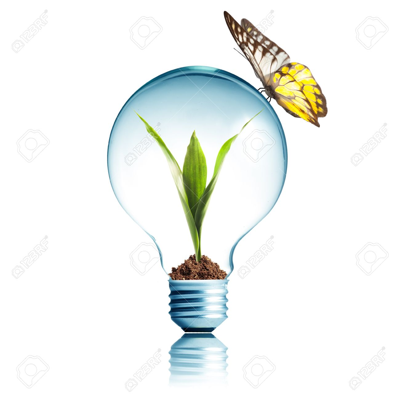 Plant Glowing Inside Light Bulb With Butterfly Stock Photo.