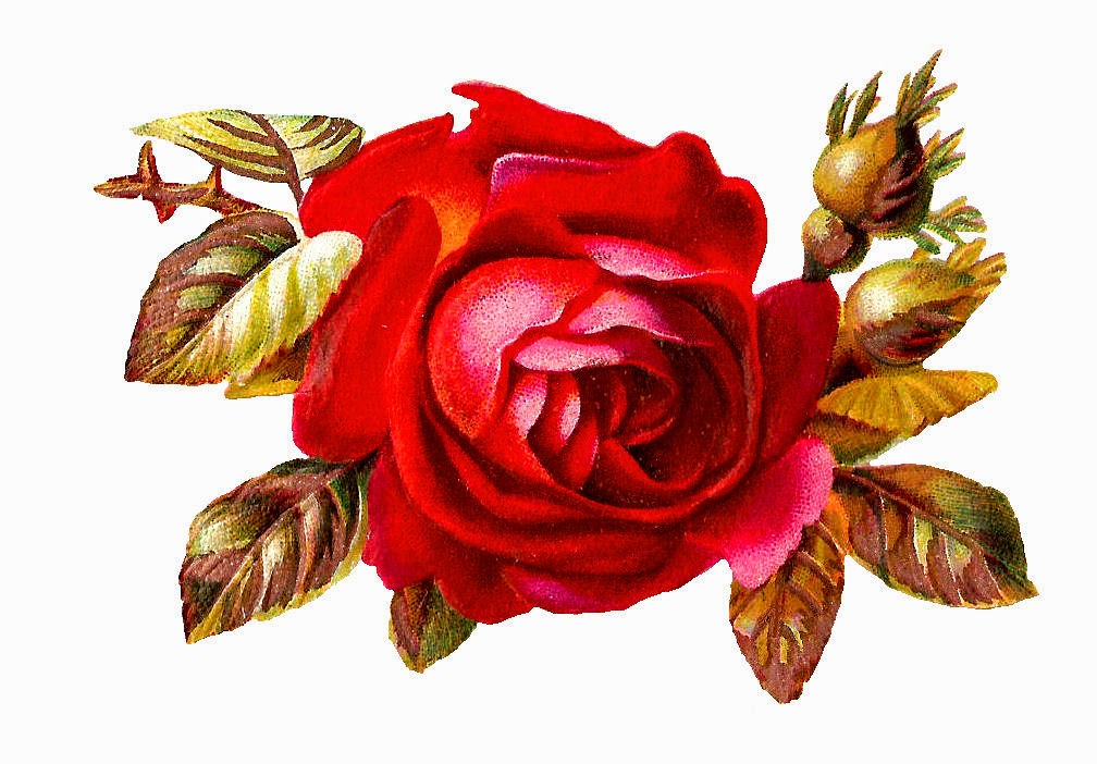 Antique Images: Free Digital Red Rose Clip Art Variety American Beauty.