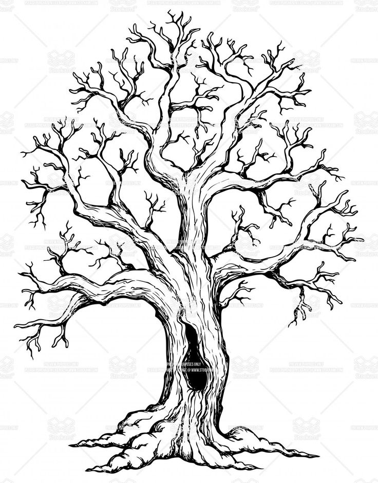 free clipart line drawing live oak tree - Clipground