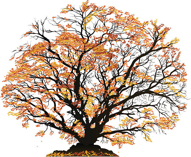 Silhouette Of The Gnarly Trees Clip Art, Vector Images.