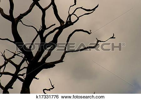 Stock Images of Gnarly tree silhouette k17331776.