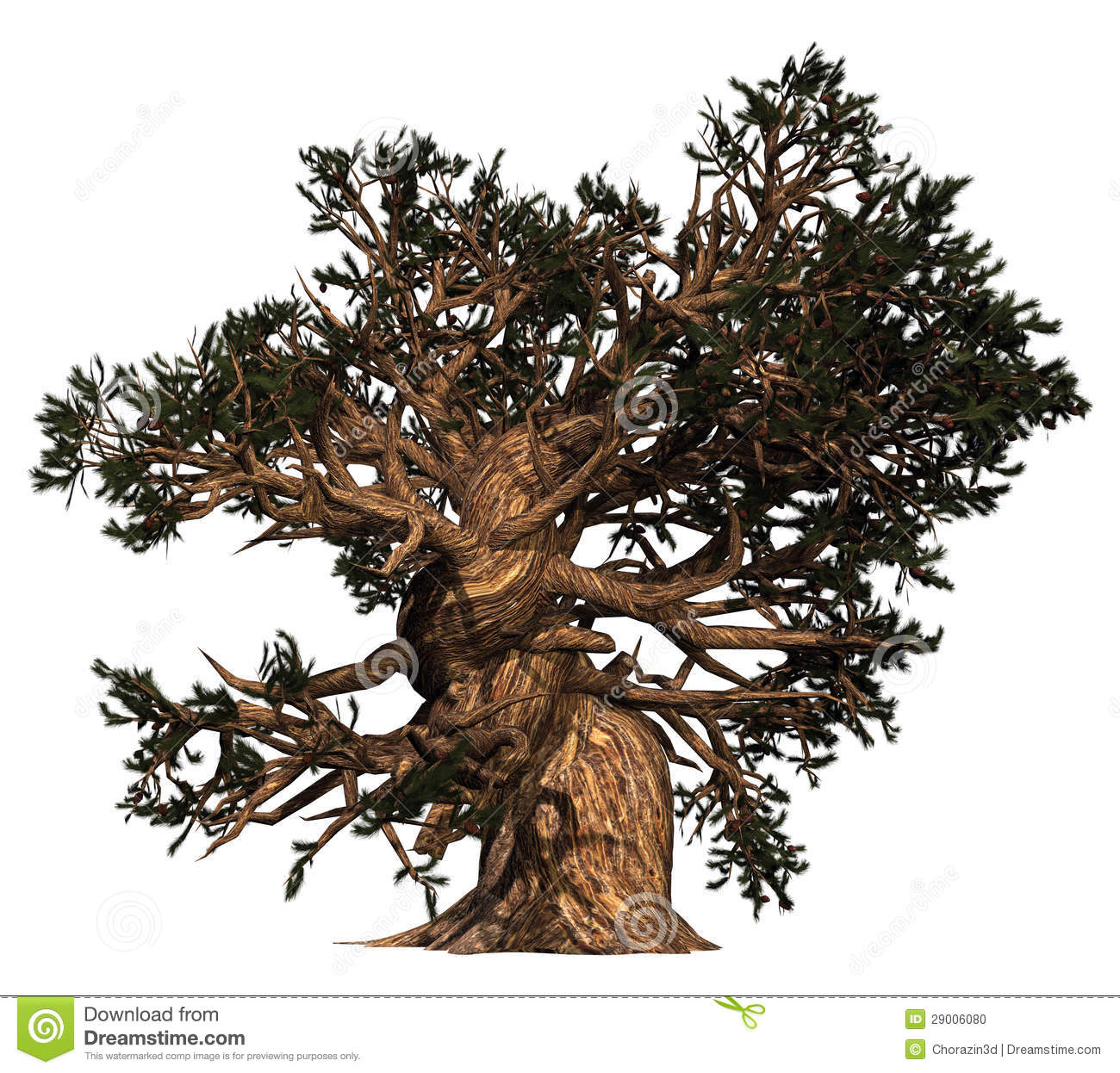 Old Gnarly Tree Stock Photo.