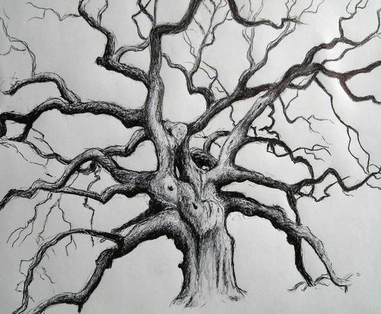 gnarly tree sketch.