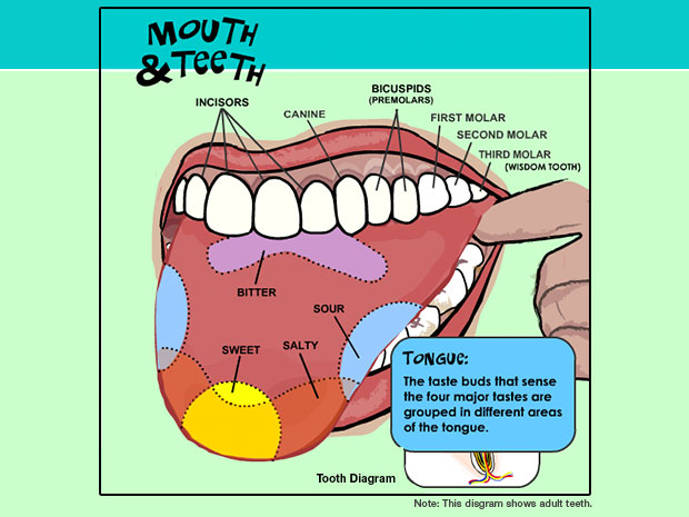 Gnashing Of Teeth Clipart Clipground
