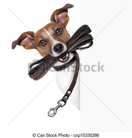 Pictures of dog with leather leash waiting to go walkies.