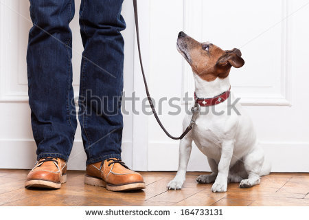 Dog Walker Stock Photos, Royalty.