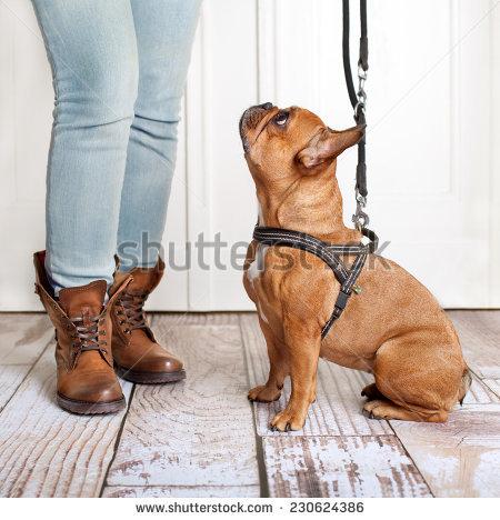 Dog Leash Stock Photos, Royalty.