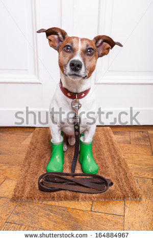 To Go Walkies Stock Photos, Royalty.
