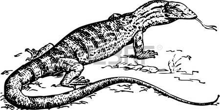 106 Komodo Stock Vector Illustration And Royalty Free Komodo Clipart.