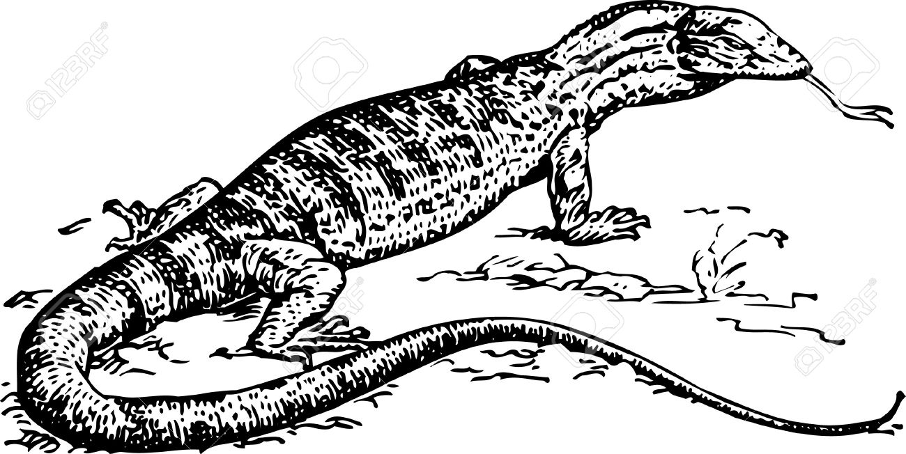 Sand Goanna Royalty Free Cliparts, Vectors, And Stock Illustration.