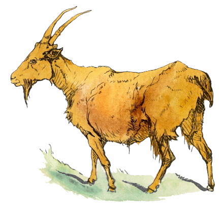 Free Buck Goat Clipart, 1 page of Public Domain Clip Art.