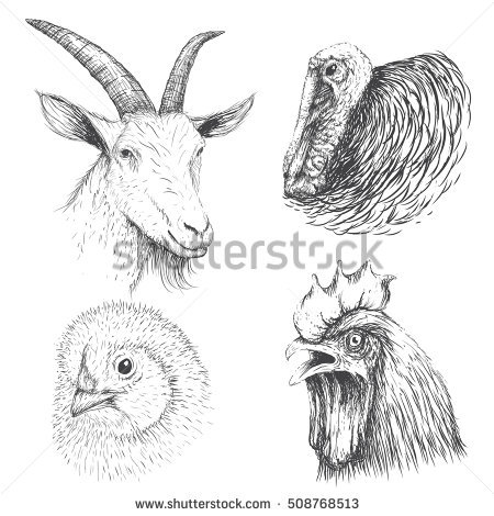 Goat Head Stock Images, Royalty.