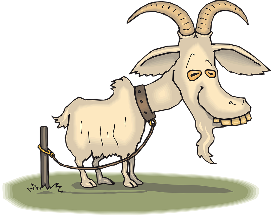Free vector graphic: Old, Goat, Animal, Tired, Tire.