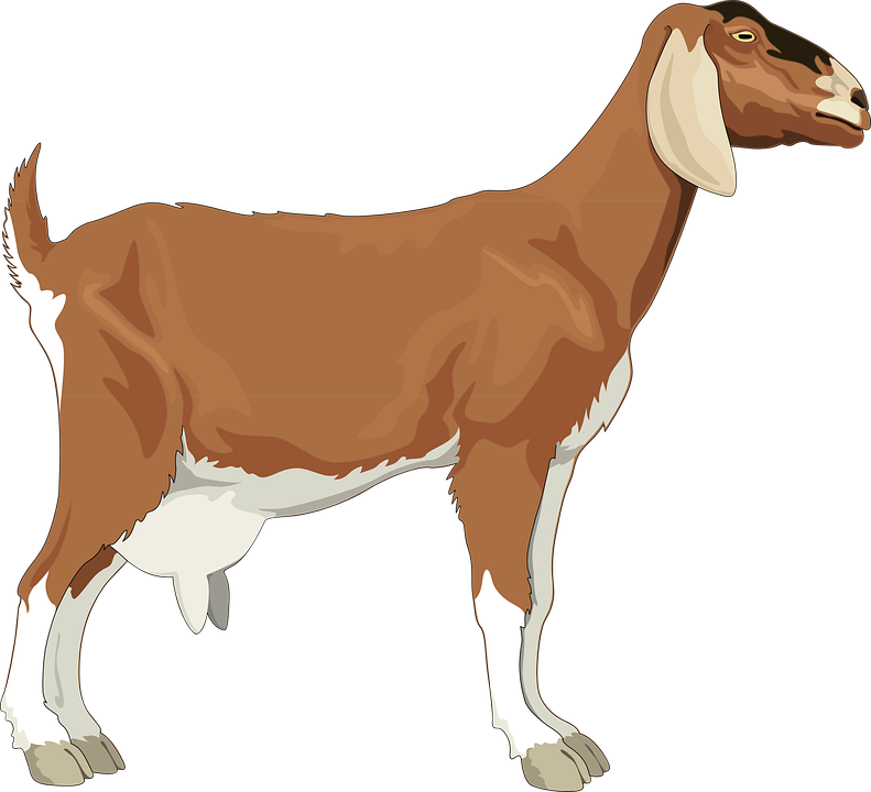 Free vector graphic: Female, Goat, Brown, Barn, Farm.