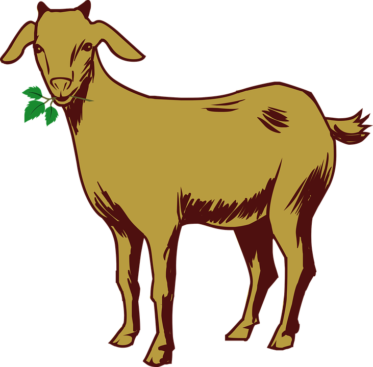 Free vector graphic: Goat, Drawing, Animal.