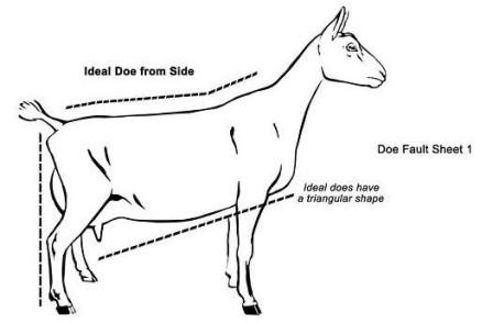 Nigerian dwarf goat clipart.