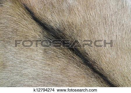 Stock Photo of goatskin detail k12794274.