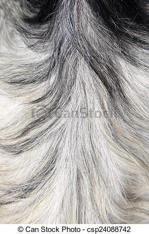 Stock Photo of Goat skin csp24088742.