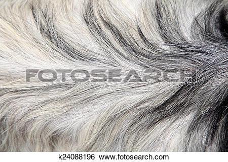 Stock Images of Goat skin k24088196.