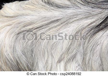 Stock Photographs of Goat skin csp24088192.