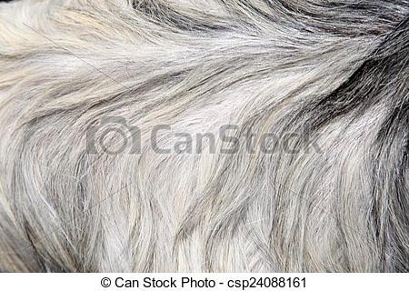 Stock Image of Goat skin csp24088161.