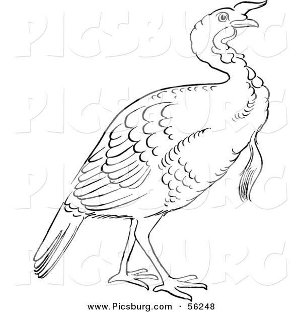 Clip Art of a Gobbler Thanksgiving Turkey Bird.