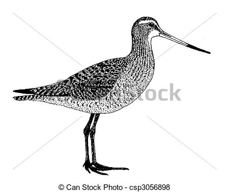 Godwit Clipart and Stock Illustrations. 8 Godwit vector EPS.