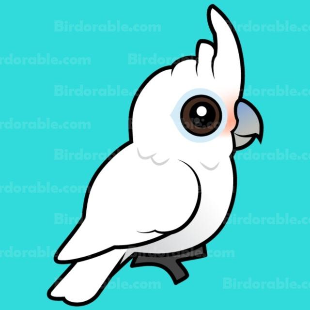 Tanimbar Corella products < Parrots & Parakeets < Birds.
