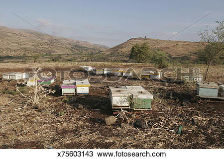 Stock Photo of Beehives on the Golan Heights with basalt rocks and.
