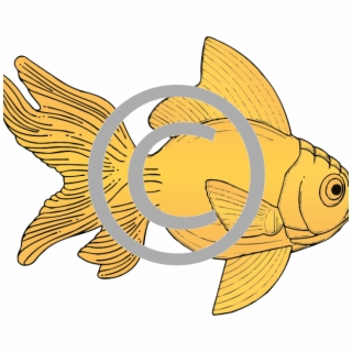 Gold Fish PNG Images.