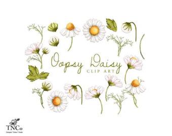 Daisy illustration.