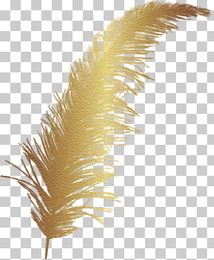 Feather , Cartoon Golden Feather, brown feather illustration.