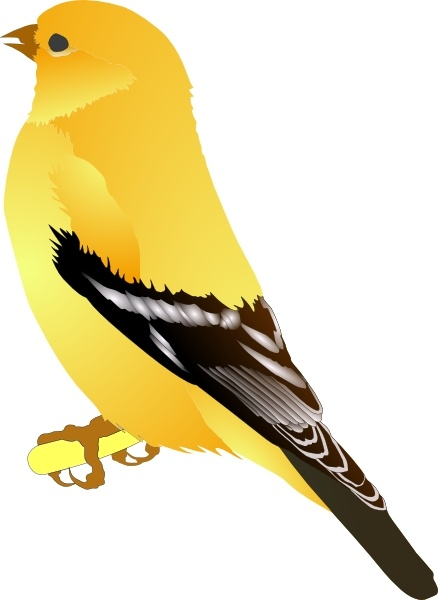 Gold Finch clip art Free vector in Open office drawing svg ( .svg.