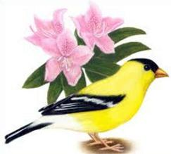Free Willow Goldfinch Clipart.