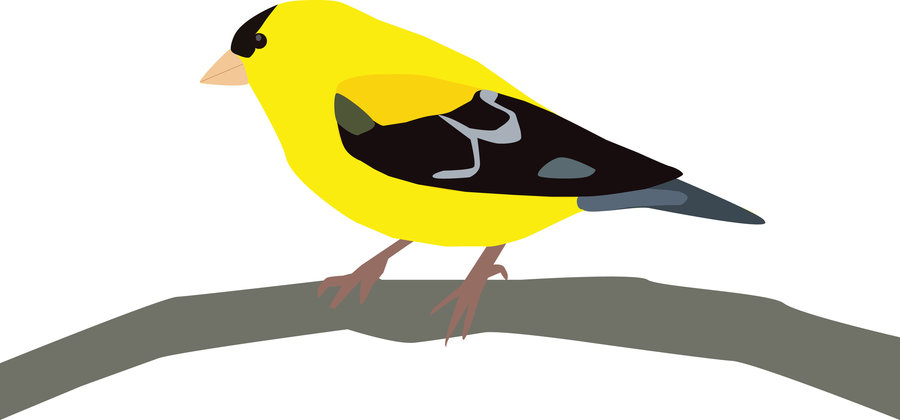 Gold finch clipart - Clipground