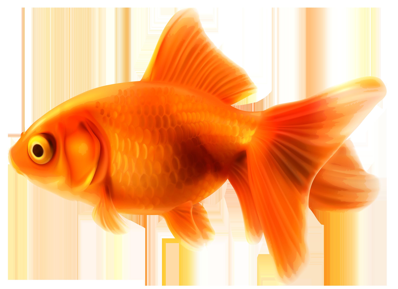 Goldfish PNG Clipart.
