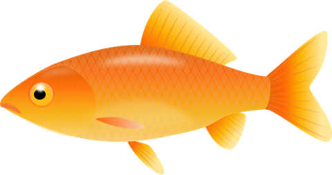 Gold fish clip art.