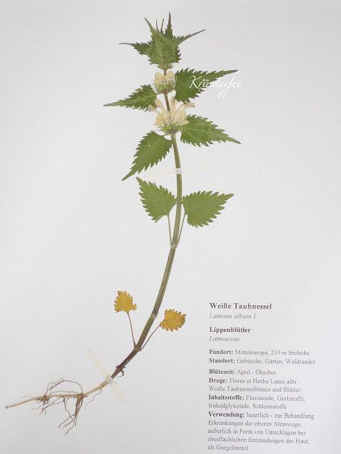 1000+ ideas about Herbarium Vorlage on Pinterest.