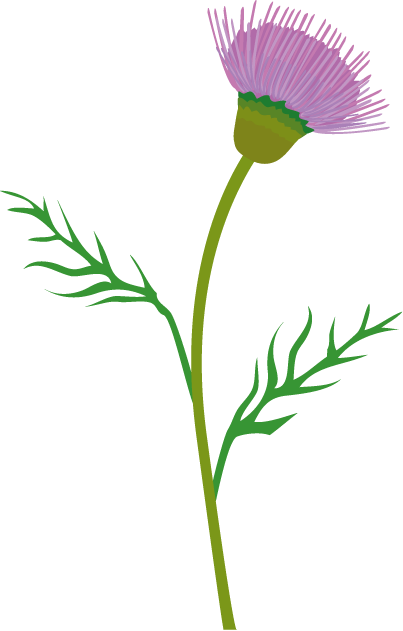 Thistle Flower Clip Art.