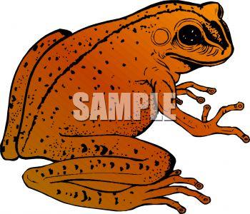 Golden Toad.