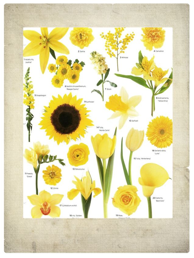 Gold yellow flowers clipart #6