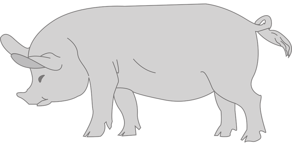 Free vector graphic: Pig, Animal, Tail, Curly, Gray.